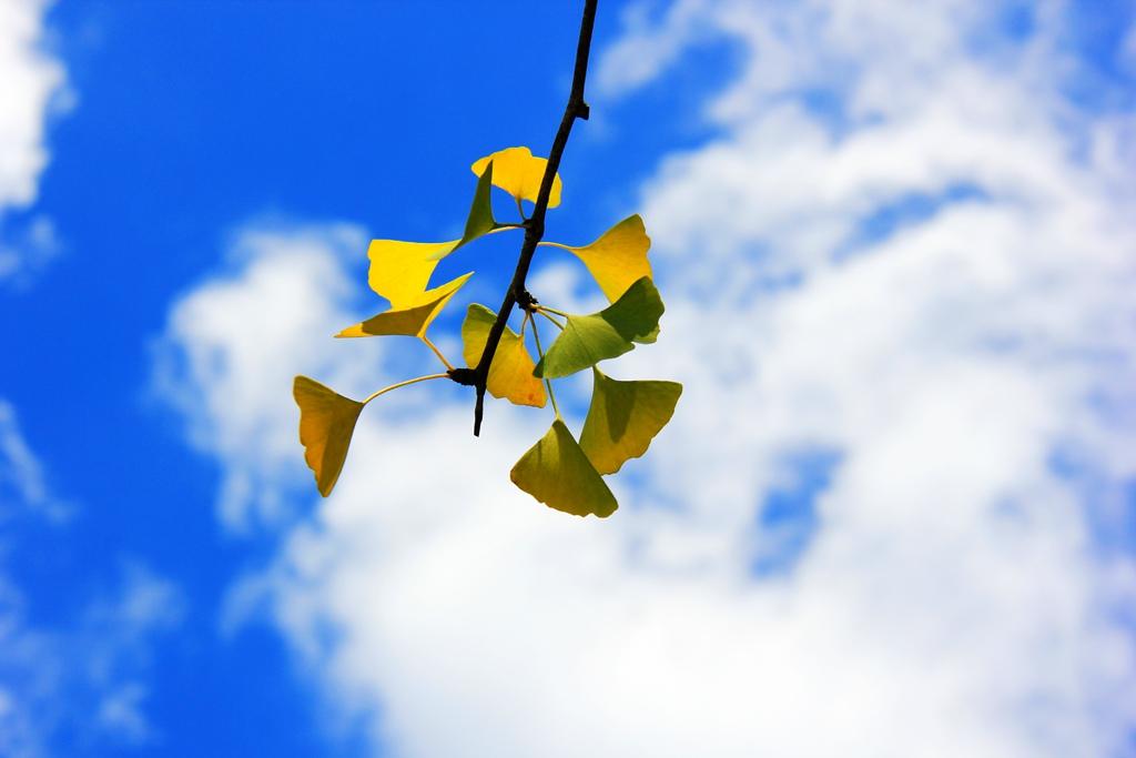 三伏天的蓝天白云